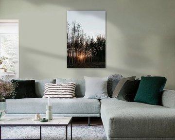 Bos met zonsondergang  | Veluwe, Nederland (Holland) van Trix Leeflang