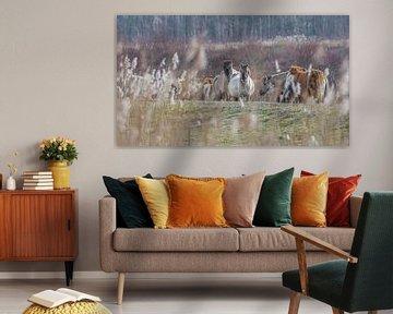 Wildpferde von Friedhelm Peters