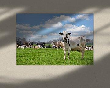 Koeien in de wei van Yvonne van Driel