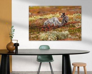 Jonge Poolvossen in een kleurrijk herfstlandschap van Harry Punter