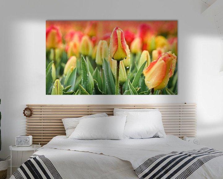 Sfeerimpressie: Tulpen bij regenachtig weer in de lente van eric van der eijk