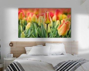 Tulpen bij regenachtig weer in de lente van eric van der eijk