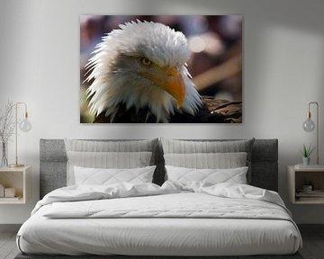 Weißkopfseeadler von Mario de Lijser