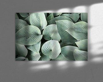 Hosta bladeren van Harry Wedzinga