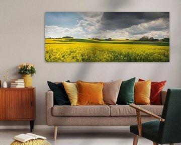 Velden van Goud van Joris Pannemans - Loris Photography