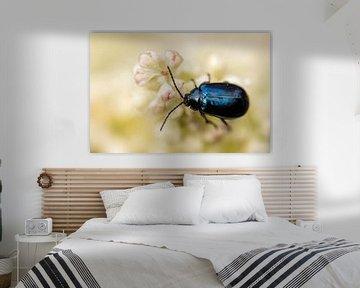 Käfer von ton vogels
