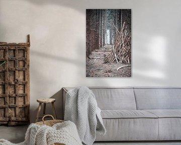 Doorkijk bos van Steven Luchtmeijer