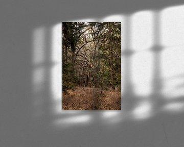 Oranjewoud. van Jakob Huizen van