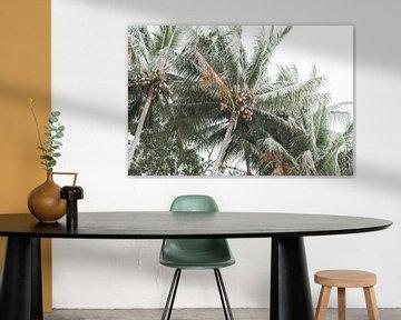 Onder de Australische Palmbomen van DsDuppenPhotography