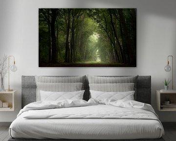 Hoogzomer donker woud van Henk Groenewoud