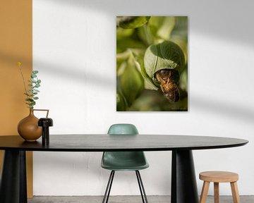 Versteckspiel Bienen von Larissa Geuke