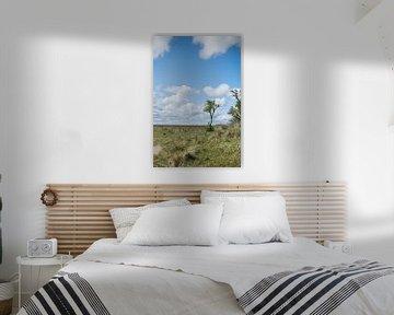 Panorama met boom op Schiermonnikoog van Patrick Verhoef