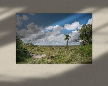 Panorama mit Baum auf Schiermonnikoog von Patrick Verhoef