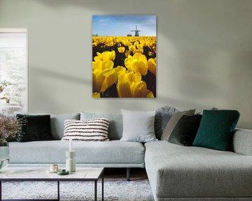 Windmühle mit Feld von gelben Tulpen, Niederlande, Trick, Montage von Rene van der Meer
