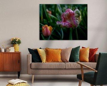 Tulpe von YVON Bilderbeek