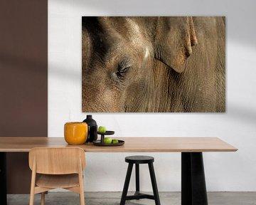 Aziatische olifant van Antwan Janssen