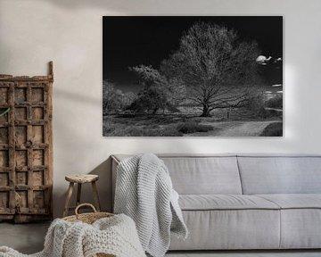 Baum in B&W von Marcel van Berkel