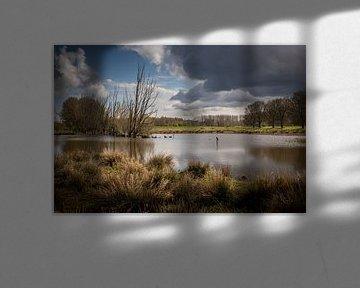 Aalscholver in vrije natuur van Marcel van Berkel