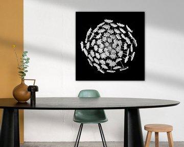 I AM - Weiße Blume auf schwarzem Hintergrund von Sacha van der Veen