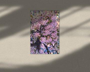 Blüte von Anouschka Hendriks