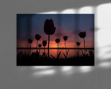 Tulpen bei Sonnenuntergang. Schatten-Tulpe von Robin van Maanen