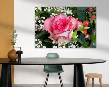Rosa Rose von W J Kok