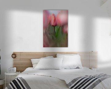 een roze tulp in een veld van 7.2 Photography