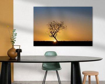 Eenzame boom bij zonsopkomst van Bas Ronteltap