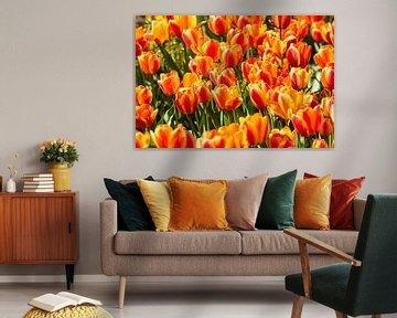 Orange Tulpen von Kris Christiaens