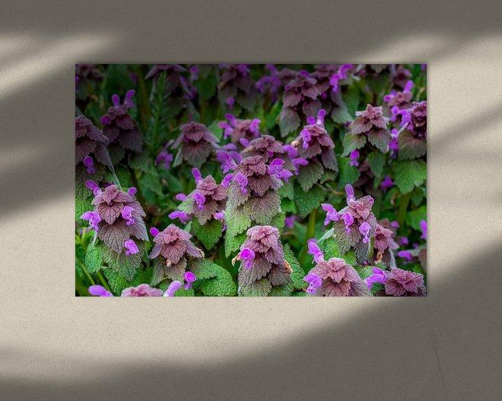 Beispiel: Blumenwiese im Frühling mit purpurotenTaubnesseln von Fartifos