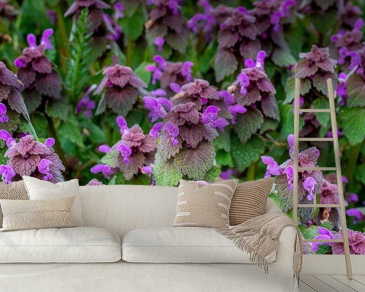 Beispiel fototapete: Blumenwiese im Frühling mit purpurotenTaubnesseln von Fartifos