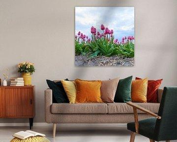 roze tulpen van Cindy van der Sluijs