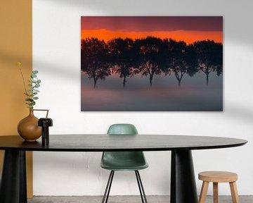 bomenrij in de mist van Monika Wolters