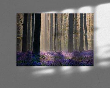 Blühende Waldhyazinthen im Hallerbos von Paul Begijn