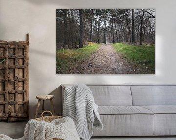 Chemin solitaire Soesterduinen sur Wilbert Burger