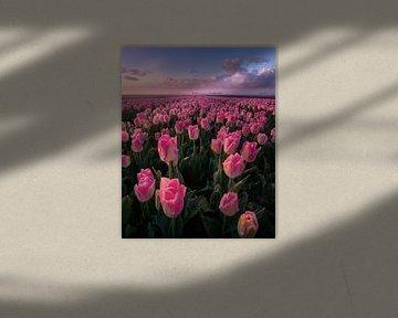 Het tulpen paradijs van Niels Tichelaar