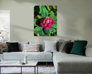 3D Rosa und Grün von GoingDutch