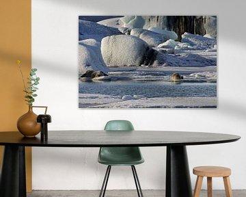 Zeehonden op het ijs van Antwan Janssen