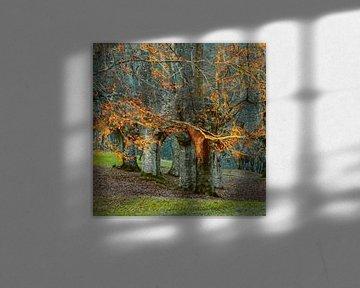 Baskische Bomen van Lars van de Goor