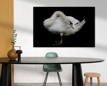 Weißer Schwan von Ulrike Leone