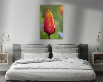 Close up van een rode tulp