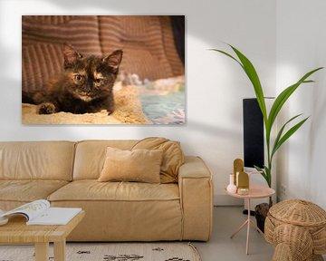 Katze von Pascal Krieger