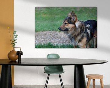 """Hund 2 """"Was soll das jetzt?"""" von Pascal Krieger"""