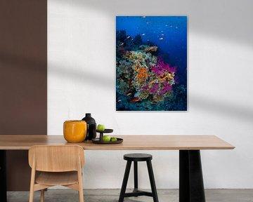 Korallengarten, Hai- und Yolanda-Riff, Rotes Meer 1 von René Weterings