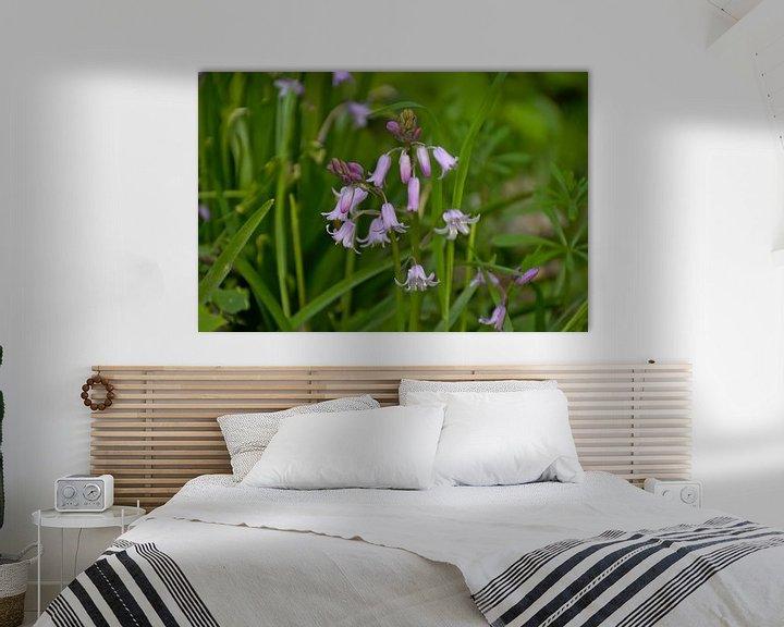 Sfeerimpressie: Roze hyacinthen in the bos van Kristof Lauwers