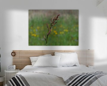 Blume von Greta Lipman
