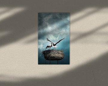Ooievaars in nest tegen dramatische achtergrond van Chihong