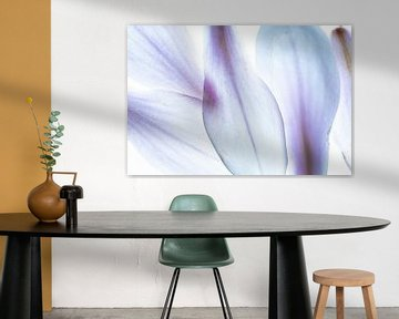 Magnolie Blütenblätter Abstraktion Makro  blau von Dieter Walther