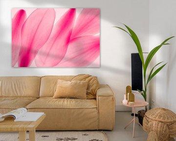 Magnolie Blütenblätter Abstraktion Makro  pink von Dieter Walther