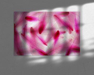 Mehrfachbelichtung Magnolie Blütenblätter Abstraktion Makro  übereinander von Dieter Walther